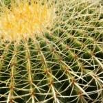 4063277-grosse-und-gefahrliche-dornen-der-gr-nen-kaktus